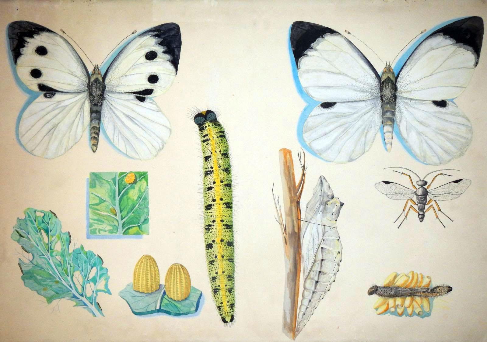 Collezioni entomologiche
