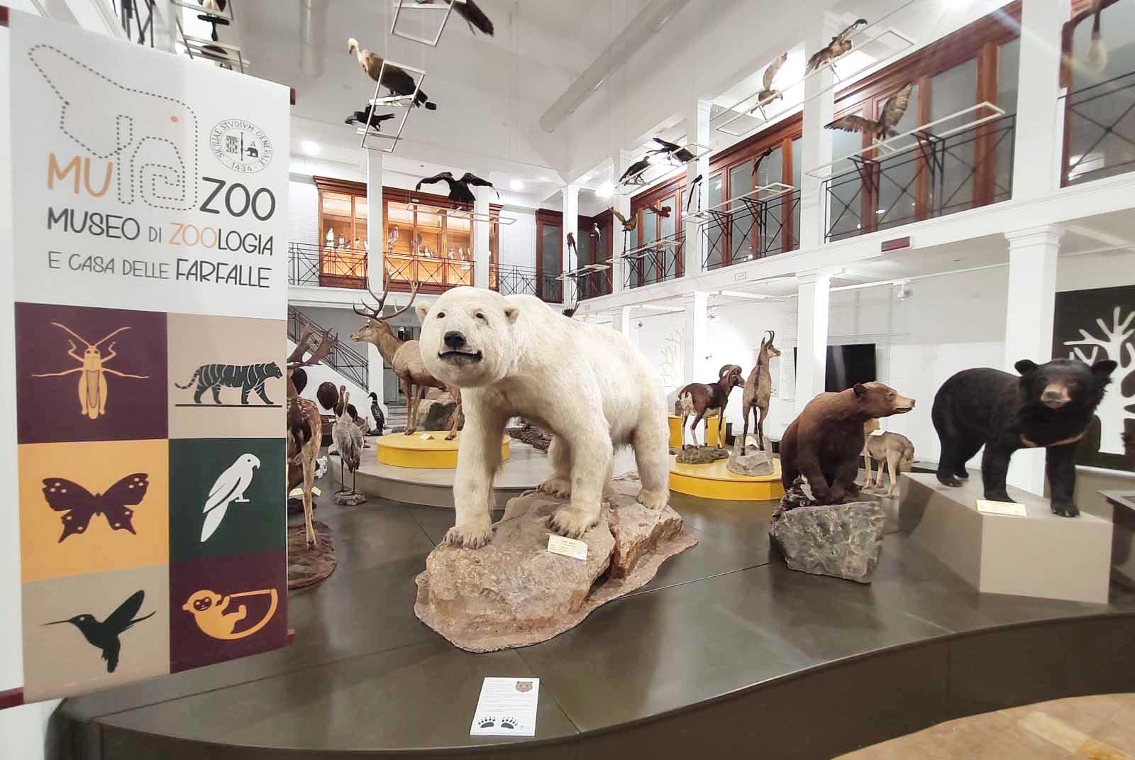 Animali al museo di Zoologia