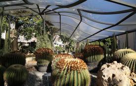 succulente all'Orto botanico
