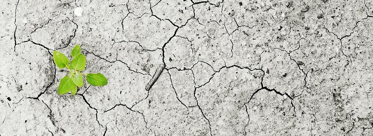piantina verde su terreno arido resilienza